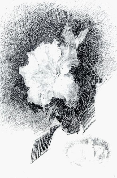 фото азалия белая