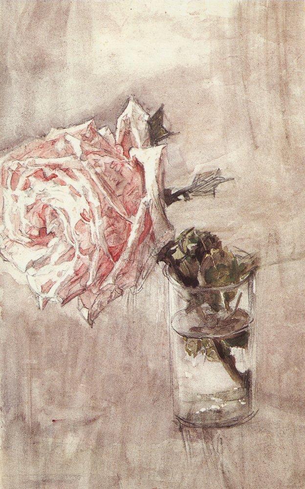 Роза алла